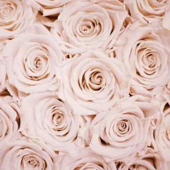grow roses